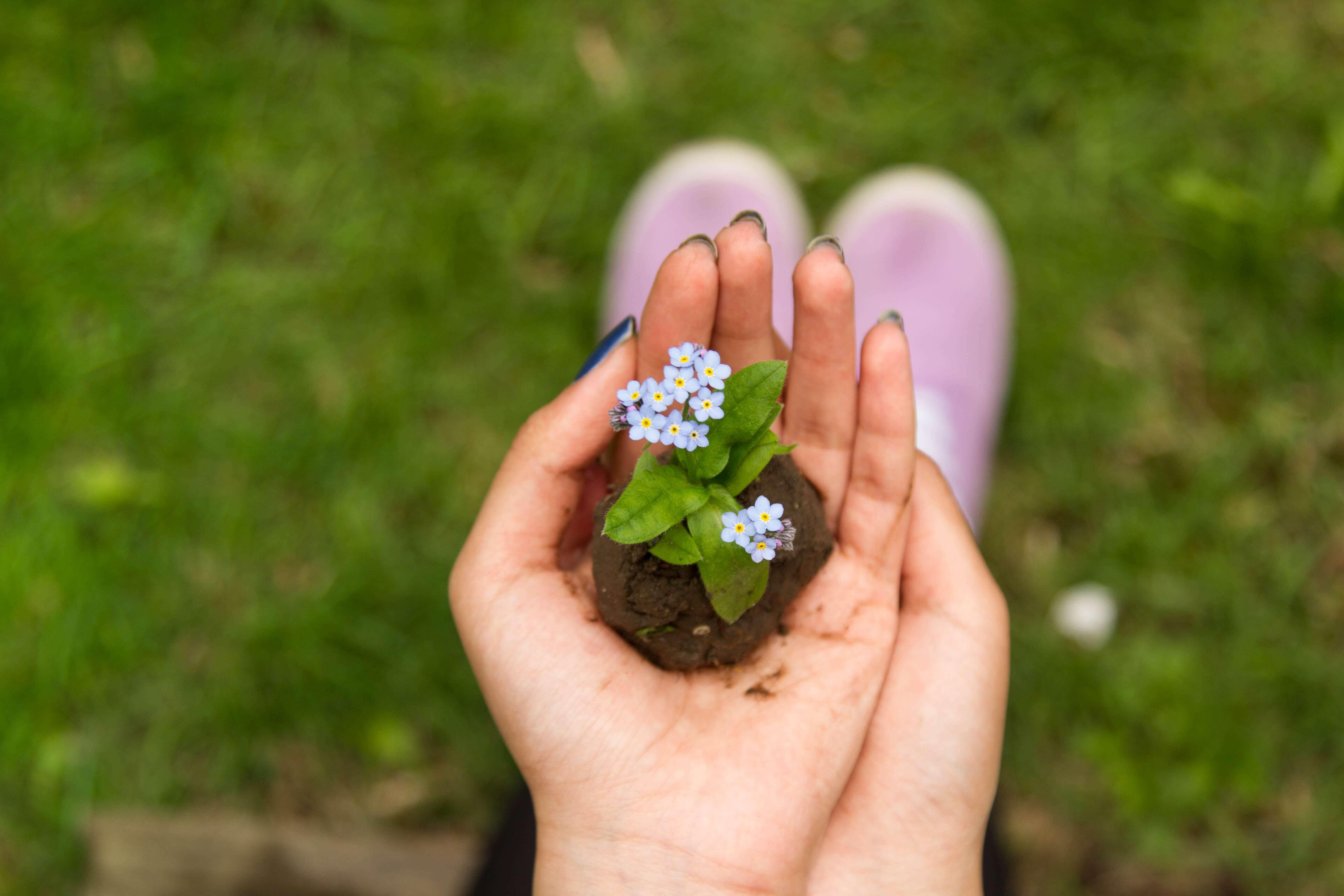 手の平に花